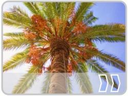 B�ume und Palmen