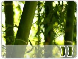 Bambus, Bäume & Palmen