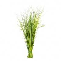 Gras / Moos / Kräuter
