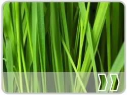 Gras / Moos / Weinstock / Kr�uter