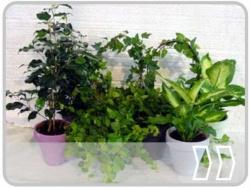 Gr�npflanzen