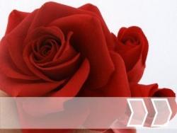 Valentin/Muttertag