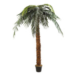 Phoenix palm in pot plastic, artificial silk 300cm Color:...