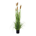 Reed 9-fold, in plastic pot 150cm Color: green/brown