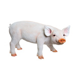 Pig, standing polyresin, for in- and outdoor 47x24x28cm...