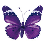 Butterfly with clip pvc 20x30cm Color: violet