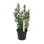 Herbs in pot rosemary, synthetic material 23 cm high...