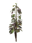 EUROPALMS Croton with coconut trunk, artificial, 180cm
