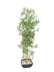 EUROPALMS Bamboo in bowl, artificial, 150cm