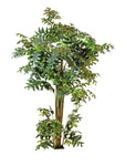 EUROPALMS Fishtail bush, artificial plant, 305cm