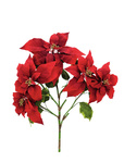 EUROPALMS Poinsettia bush, red, 60cm