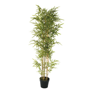 Bamboo tree in plastic pot 160cm Color: green/natural-coloured