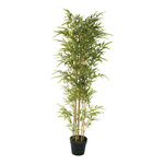 Bamboo tree in plastic pot 160cm Color:...
