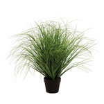 Onion grass in pot  70cm Color: green