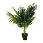 Areca palm in plastic pot 70cm Color: green