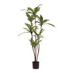 Dracaena tree in pot 115cm Color: green
