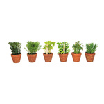 Herbs in pot, set of 6  18cm Color: green