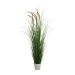 Onion grass in pot  110cm Color: green