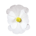 Blossom made of paper, with short stem Ø45cm Color: white