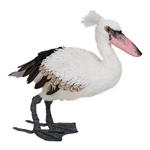 Pelican standing 30cm Color: white/grey