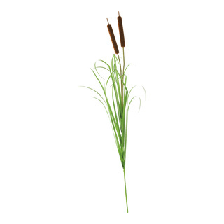 Bullrush 2-fold, with onion grass 120cm Color: green/brown