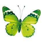 Butterfly with clip pvc 20x30cm Color: green