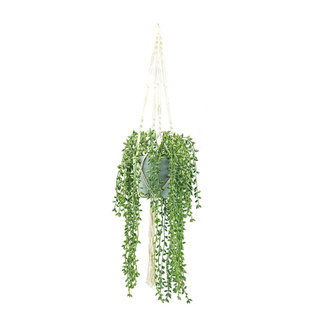 Pea plant in pot, with rope hanger H: 100cm Color: green