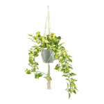 Ivy in pot, with rope hanger H: 90cm Color: green