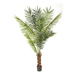 Kentia palm in pot, 10 palm fronds & 540 leaves 240cm...