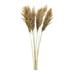 Bunch of pampas grass 6-fold, dried 65-75cm Color: natural