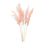 Bunch of pampas grass 6-fold, dried 65-75cm Color: pink