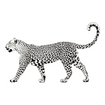 Cut-Out »Leopard« foldable backside support 120x70cm...