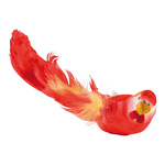 Budgerigar with clip styrofoam, feathers 5x26cm Color: red