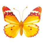 Butterfly with clip pvc 20x30cm Color: orange