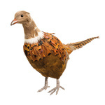 Pheasant with feathers 52x11x22cm Color: brown