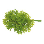 Pick of parsley 12-fold, plastic 22x5cm Color: green